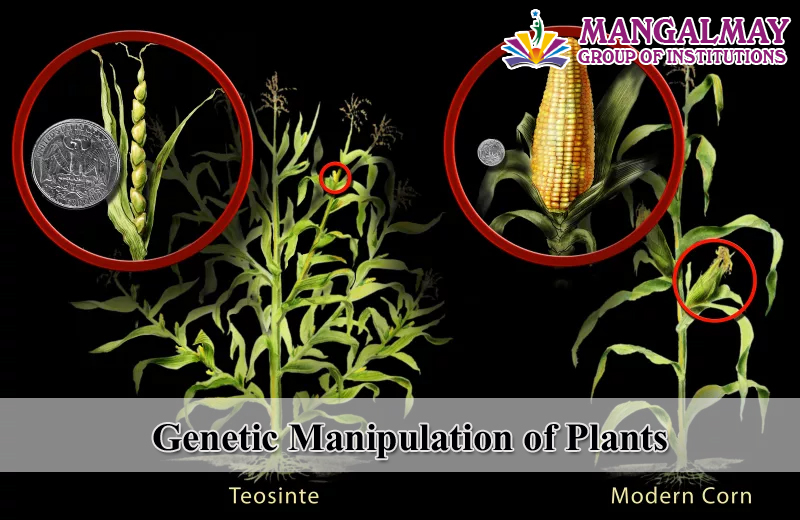 Genetic Manipulation of Plants
