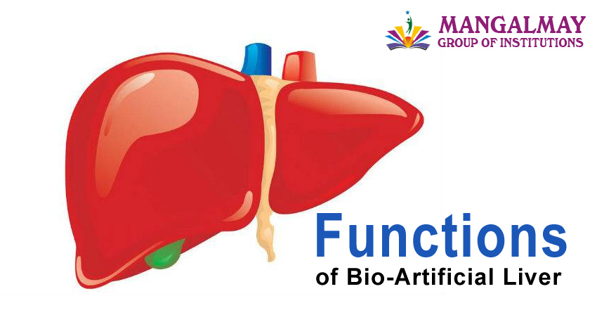 Functions of Bio-Artificial Liver